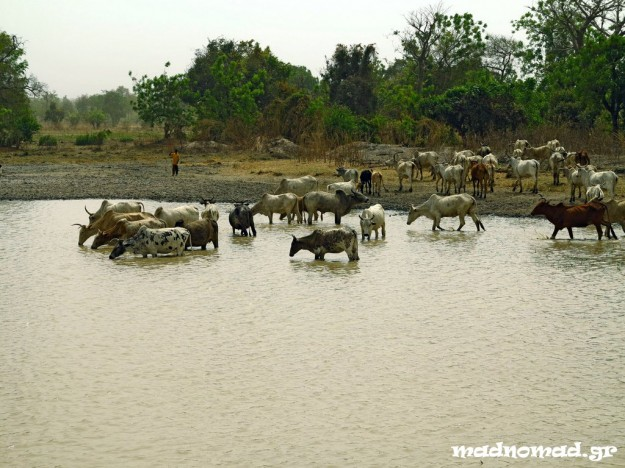Especially during the dry season, animals gather around waterholes searching for the priceless element of water.