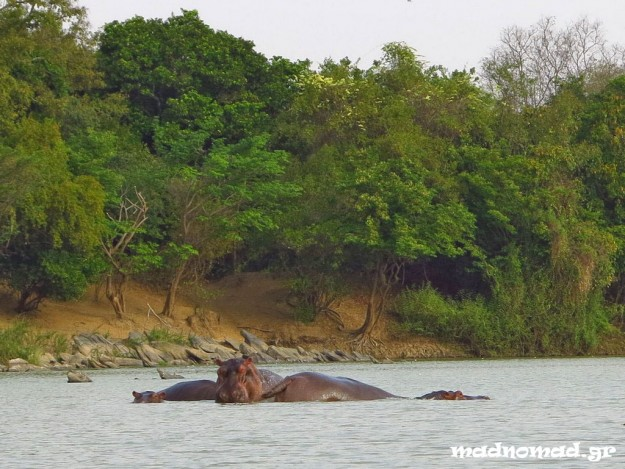 We saw some hippos on our first safari in Africa!