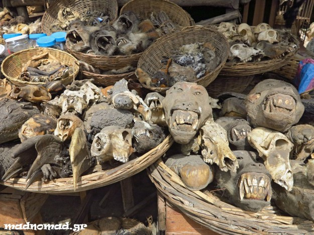 Heads of monkeys and other animals, fowl feathers, skins and furs, dried lizards and more are being sold as ingredients for the voodoo ceremonies!