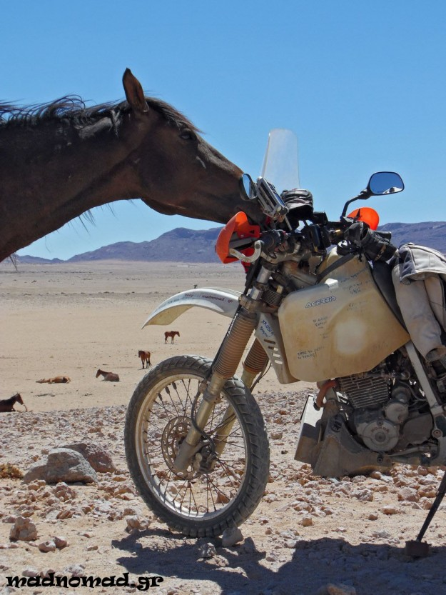 These wild horses have been adapted to the harsh conditions of Namib, the world's eldest desert and they are now characterized as a special breed. I think one of them actually fell in love with Baobabis!
