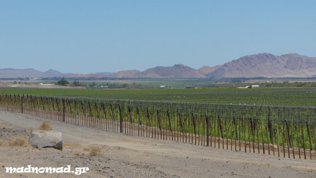 It is strange that Aussenkehr, despite it sits in a desert, is full of vineyards!