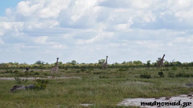 Σαφάρι με τη μοτοσυκλέτα μου! Περνούσα δίπλα από καμηλοπαρδάλεις, ελέφαντες, φακόχοιρους και αντιλόπες!