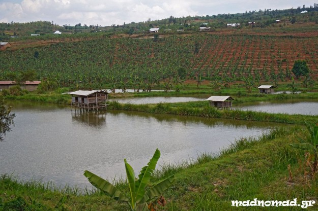In Rwanda they install these wooden houses over small fish farms and rabbits are bred there. This way, the rabbit dung falls in the water and fish find it... tasty!