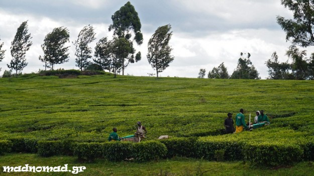 One of the ways colonists became rich was the famous tea plantations of Kenya.