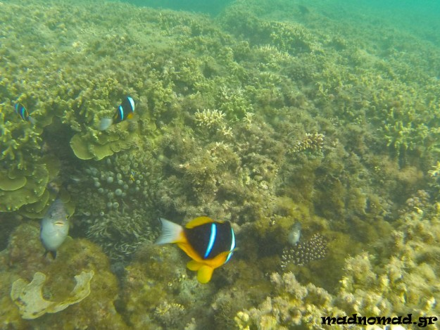 You don't even need to dive to see beautiful corals and colorful fish on the Kenyan coast... Snorkeling is enough ;-)