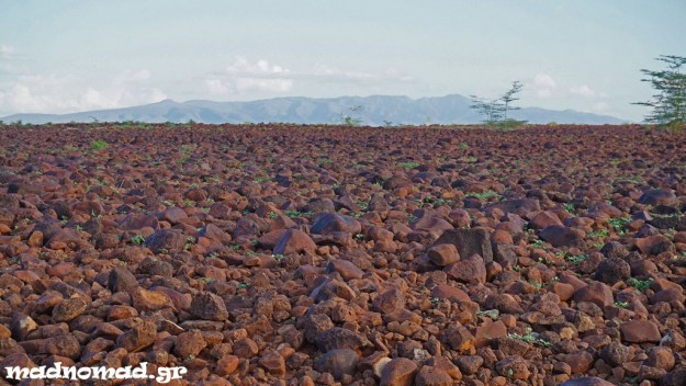 The only feature in the landscape around Lake Turkana is these volcanic rocks...
