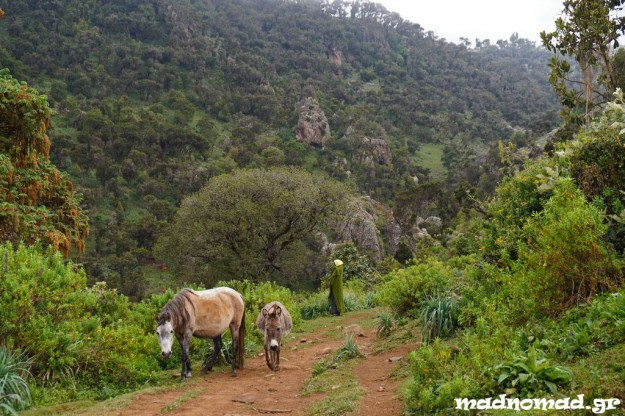 Bale Mountains became my favourite place in Southern Ethiopia!