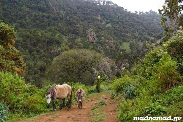 Τα Όρη Bale έγιναν το αγαπημένο μου μέρος στα νότια της Αιθιοπίας!