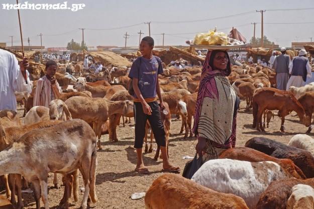 Animal market in Omdurman