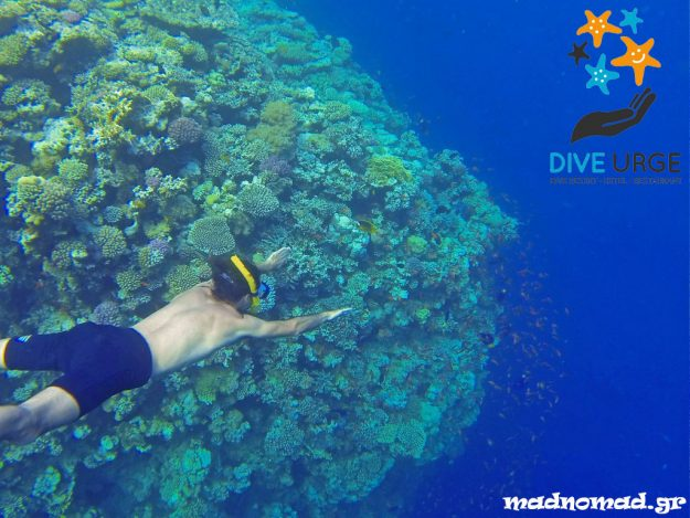 The northern part of the Red Sea is considered a diving paradise for its corals and its colourful, exotic fish. It's by far the most beautiful underwater seascape I've ever seen!