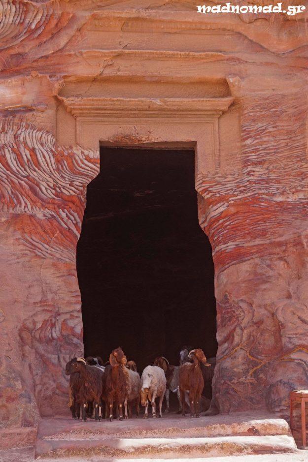 Μερικά σπήλαια στην Πέτρα κατοικούνται εδώ και αιώνες από τους Βεδουίνους (και τα κατσίκια τους!).